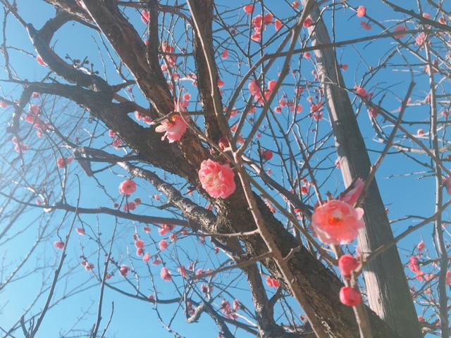 春の足音?(^^♪🌼🌺