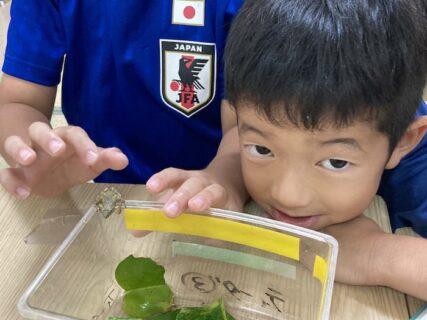 昆虫採集に夢中!夏のはじまり@tida